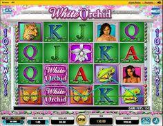 La mejor sala de poker online tragamonedas gratis Money Wheel-538450