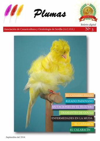 Anexo gran premi animales de australia aves gira los rodillos premios-610083