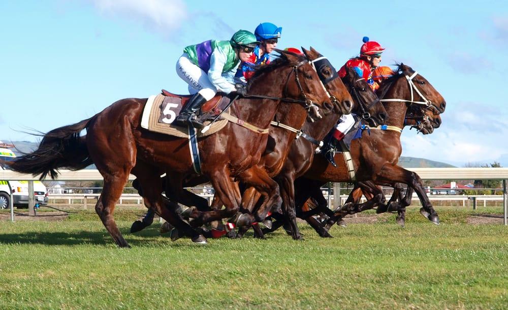 Como analizar carreras de caballos nordicBet com-396251